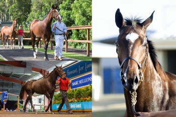 Clockwise from bottom left: Captain Sonador colt; Rothesay colt; and Show A Heart filly