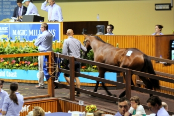 Our Love Conquers All yearling enters the ring at the Magic Millions sale (Jan 2015)