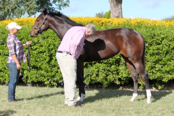 Racehorse owner Fred Manahan inspecting Intrepid Miss at Washpool (2015)
