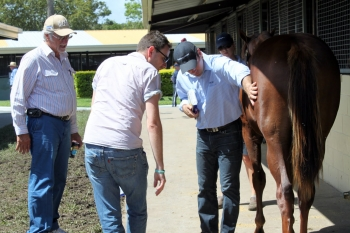 Conformation counts at QTIS Yearling sale