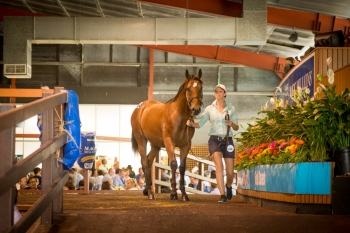 Running hot at the Gold Coast Yearling Sale